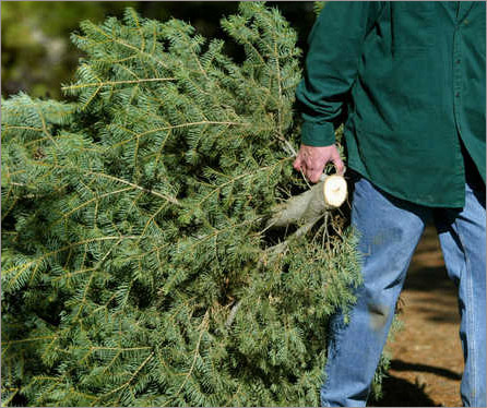 - Christmas Tree Recycling €� Northridge West Neighborhood Council, NWNC
