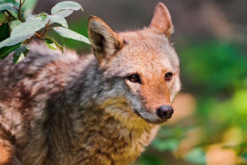 coyote-meetings